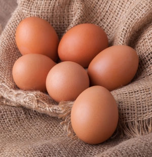 Hybrid Egg Layers